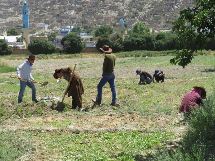 Afghan Peace Volunteers at work in their permaculture plot in Kabul