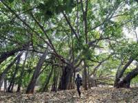The North Korean Dilemma Part II : Economic Ties And The Banyan Tree