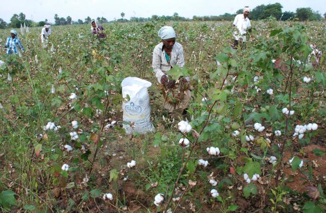 cotton-farmers