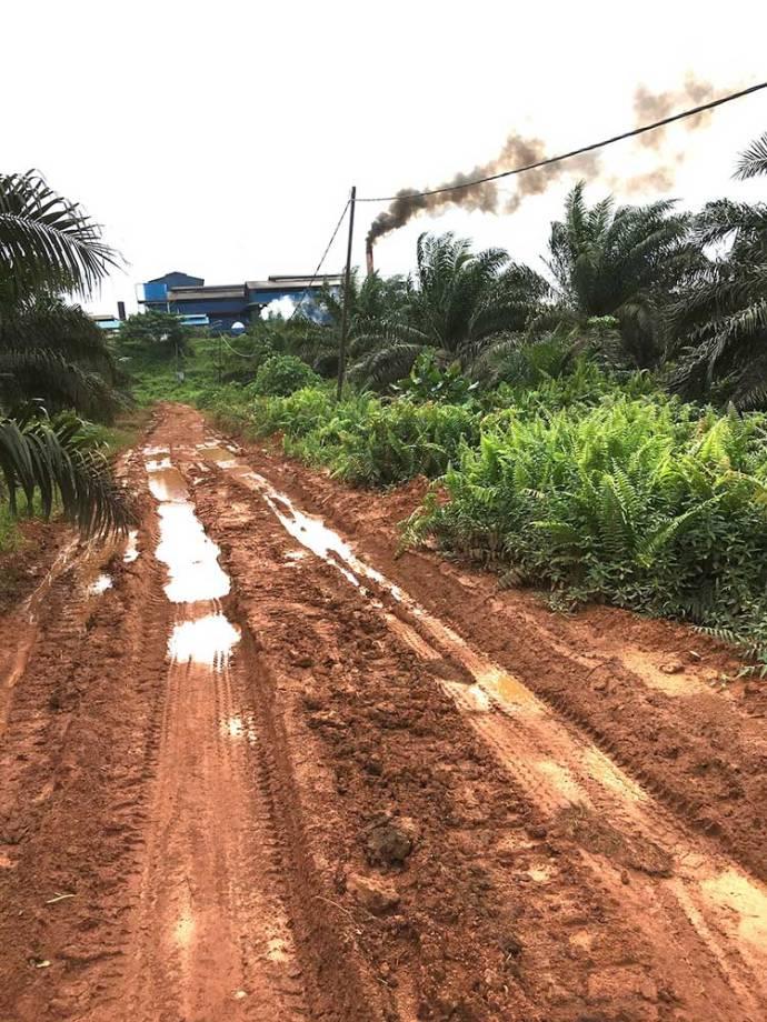 palm oil processing factory near Singkawang