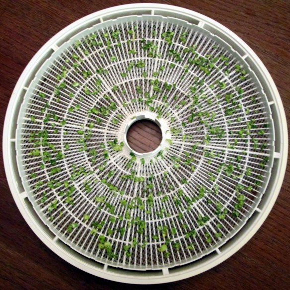 Using a food dehydrator to make celery flakes