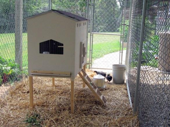 Backyard chicken coop and pen