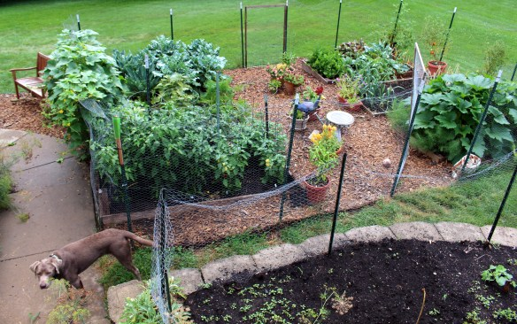 My kitchen garden in July