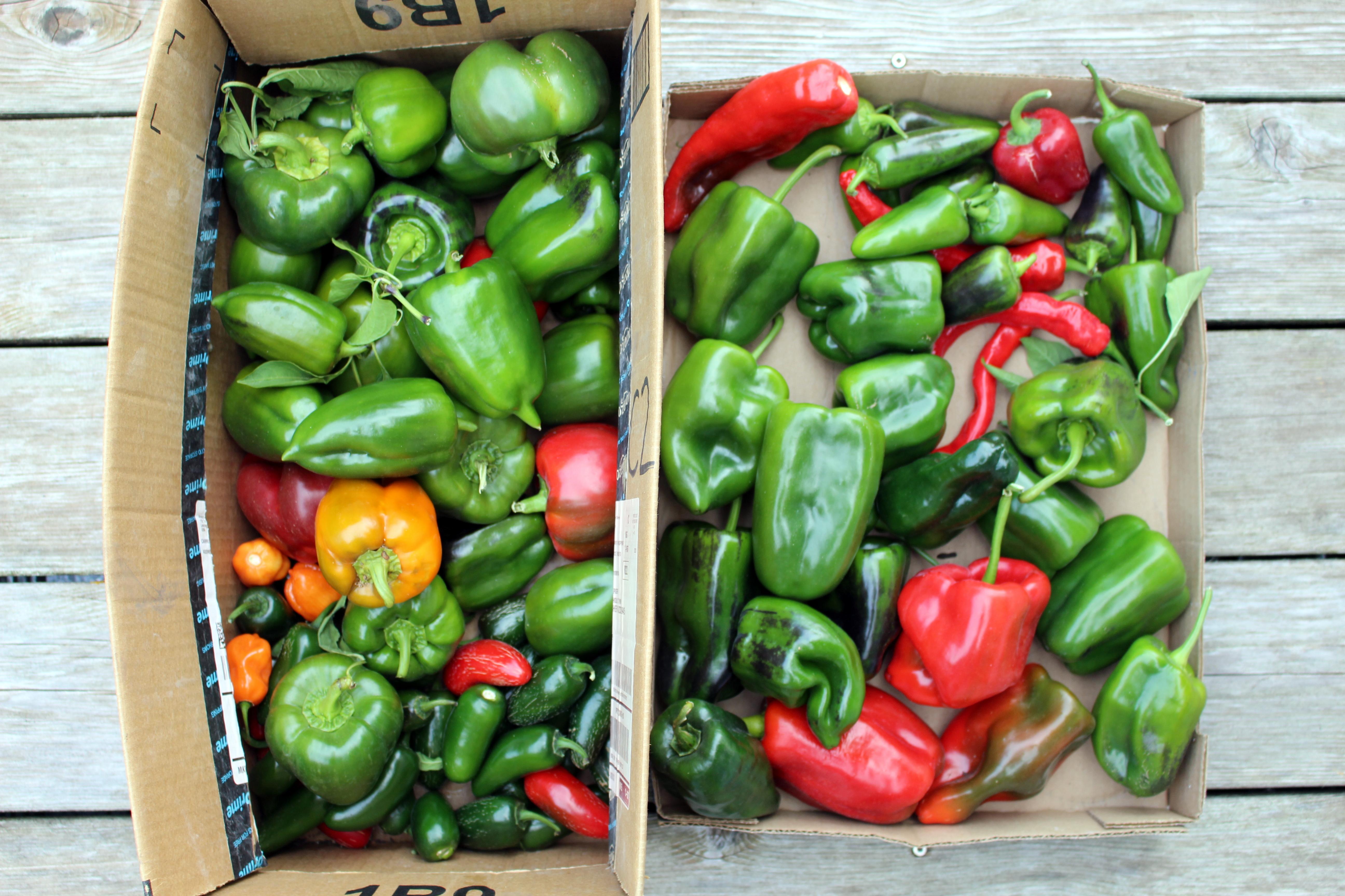 My Kitchen Garden My Kitchen Garden In October Counting My Chickenscounting My