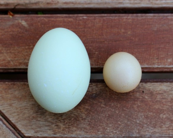 Chickens sometimes lay weird eggs