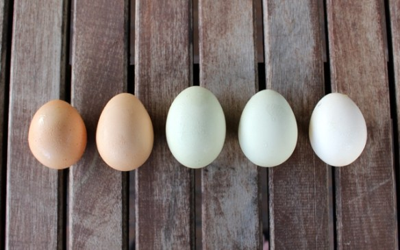 Five Egg Day