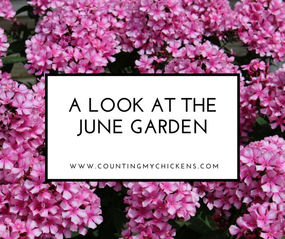 A Look at the June Garden