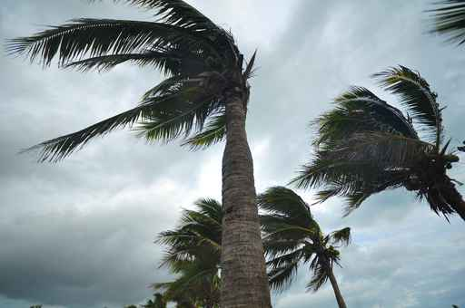 palms at hurricane_1535977851461