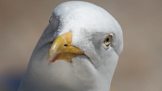 seagull_1536289874255_54495817_ver1.0_640_360_1536325586545.jpg
