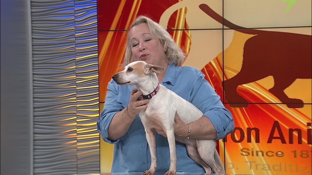 Charleston Animal Society - Pet of the Day 2/5/19