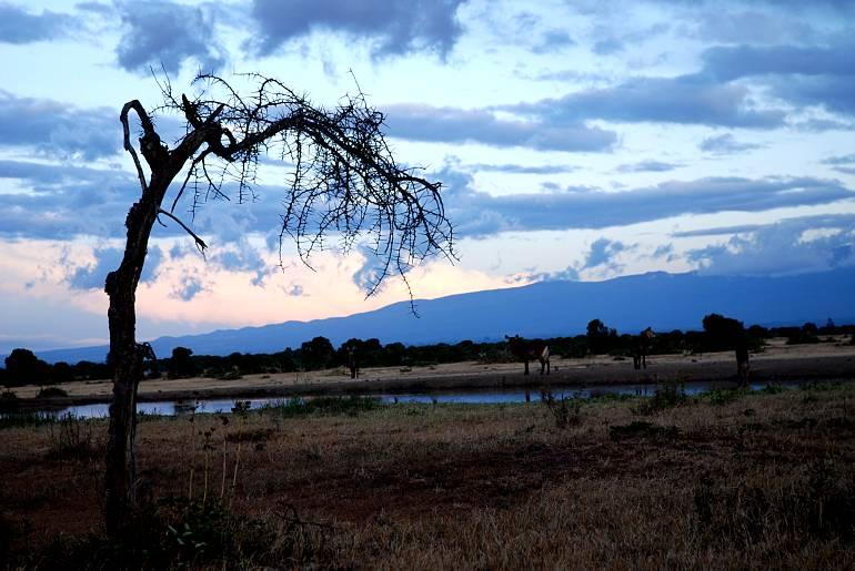 Сафари — восточная Африка