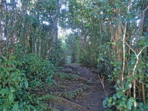 The muddy trail through the jungle