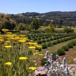 A Weekend in Wine Country | Sonoma in Snapshots