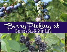 Berry Picking in Northwest Arkansas
