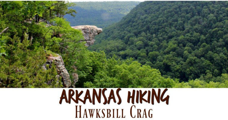 A MUST When Hiking Arkansas – Hawksbill Crag (Whitaker Point)