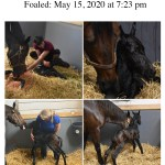 2020 Foals Country Life And Merryland Farms