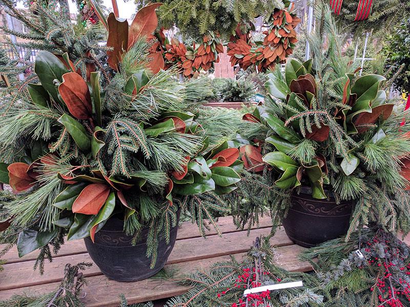 Medium Outdoor Christmas Arrangement