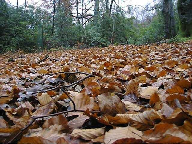 Images of woodland plants  animals 2