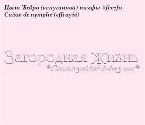 Цвет 'Бедро нимфы' Cuisse de nymphe -- #FEE7F0