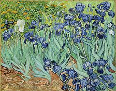 """van gogh 'irises"""" painted a year before his death in 1890"""