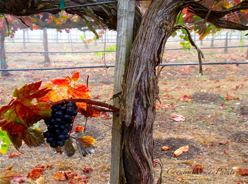vineyard-in-fall-grape-clusters-left