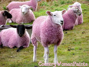 pink sheep in camo