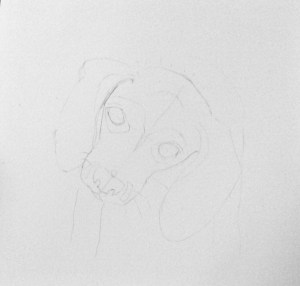 drawing of a beagle puppy