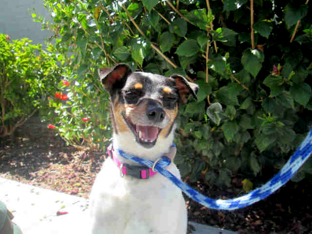 Adopt a pet in San Diego