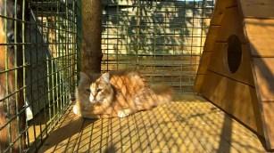 pension chat montauban gardiennage (1)
