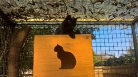 pension chat montauban gardiennage (2)