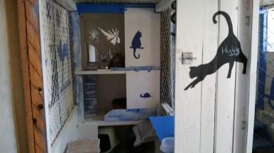 pension chat montauban gardiennage (4)