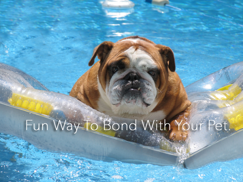 best Inflatable dog pool