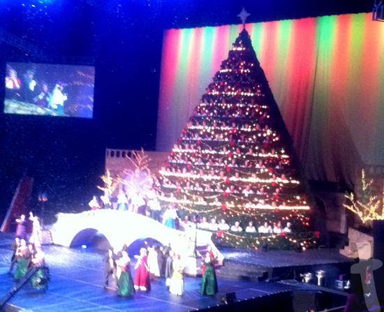 Living Christmas Tree - Photo by Carmen Hudson