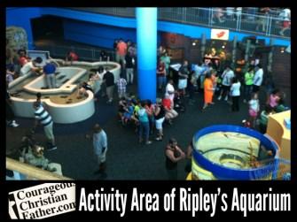 Ripley's Aquarium of the Smokies - Activity Area