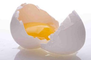 Broken, Cracked Egg - The Broken Egg