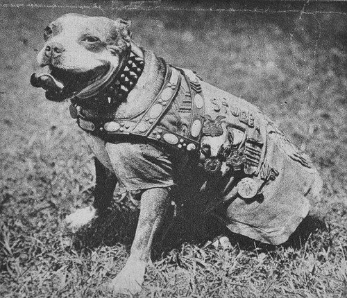 Photo of Sgt. Stubby | Photo StubbyMovie
