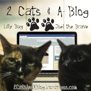 2 Cats and a Blog