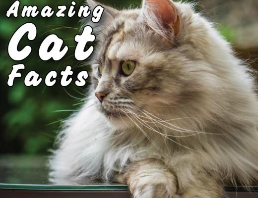 20+ Amazing Cat Facts
