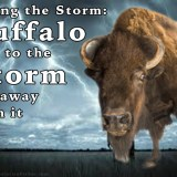 Facing the Storm: Buffalo run to the storm not away from it