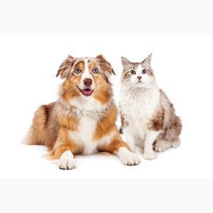 Help reduce animal overpopulation