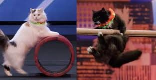 Savitsky Cats Me-Wowed the Judges of America's Got Talent - Simon one of the judges loved this act and he doesn't like cats! That says a lot! #SavitskyCats Plus the video of their act is included in this blog post!