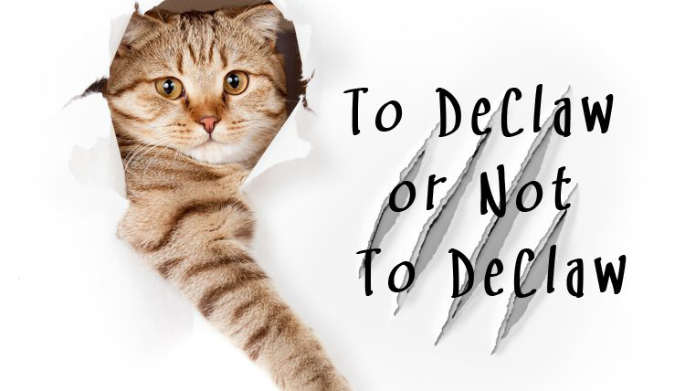To DeClaw or Not To DeClaw - The Humane Society of the United States opposes declawing cats except in rare cases when it is necessary for medical purposes, such as the removal of cancerous tumors from cats' nail beds.