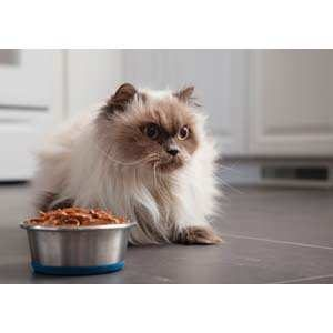 Cats and vegetarian diets may not make an ideal match. Cats have a greater need for protein than their canine counterpart.