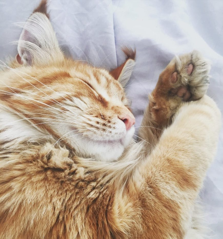 5 Humane Alternatives to Declawing - There are numerous safe and painless alternatives to declawing, including these ideas from the pet behavior experts at Ceva Animal Health: