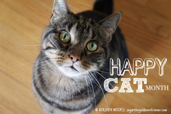 Happy Cat Month | Photo Gold Woofs