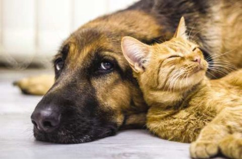 Do cats and dogs really fight like cats and dogs? - Cats and dogs can peacefully coexist in homes, especially when pet owners exercise patience and emphasize socialization.