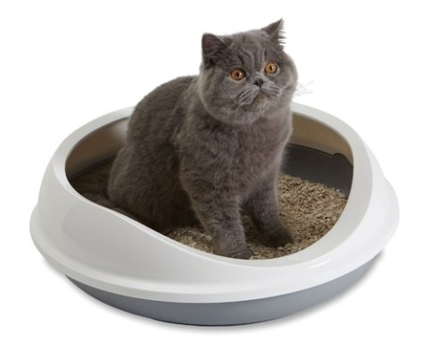 Litter box etiquette - etiquette on cat litter from Pet Dish TV.