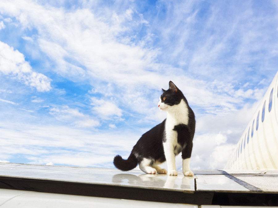 cat-on-a-plane-wing-8902385