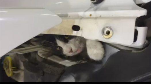 cat-car-hood-2-9514200