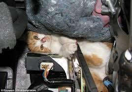cat-car-hood-3-3810831